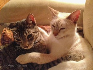 Ashley and Solito Amigos