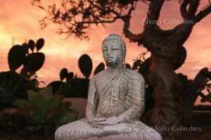 Buddha & Tarote by Alvaro Colindres