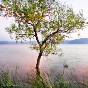 alvarocolindres-lone-tree-photo-103-4