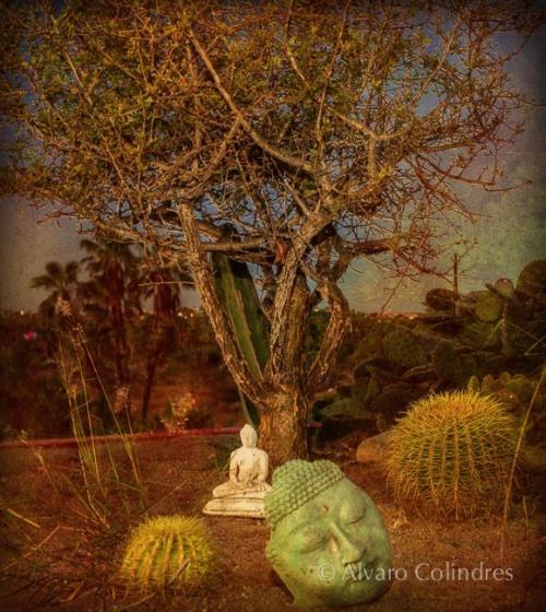 Buda abajo Tarote y Jardin de Cacti por Alvaro Colindres