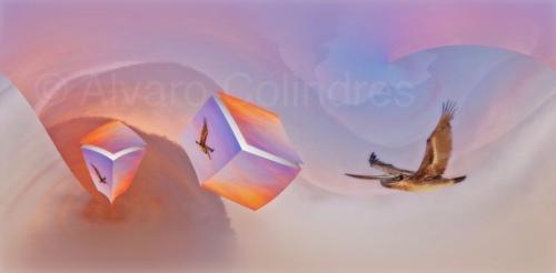Pelicans in Flight Abtract © Alvaro Colindres